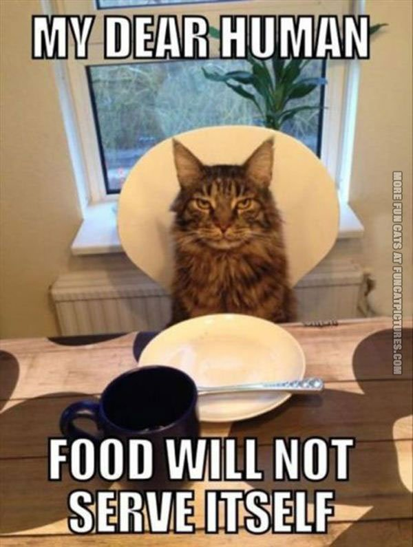 funny cats food will not serve itself my dear human