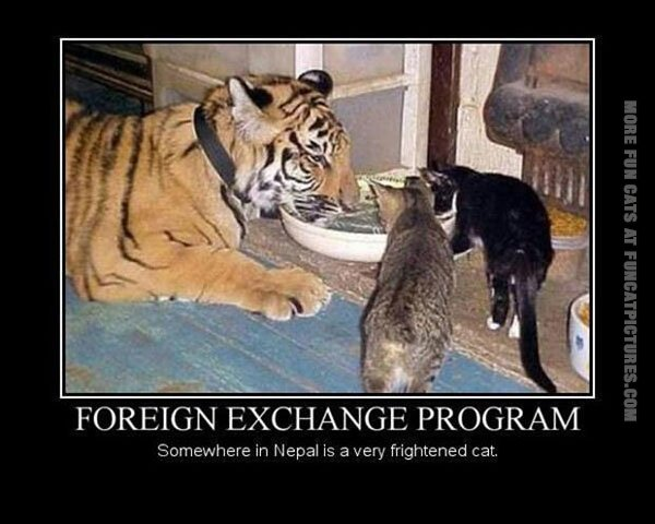 funny cats foreigh exchange program