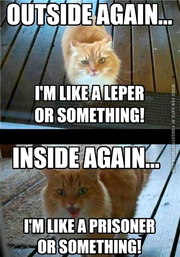funny-cats-inside-vs-outside