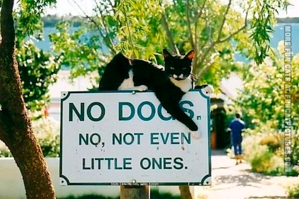 funny-cats-no-dogs-sign