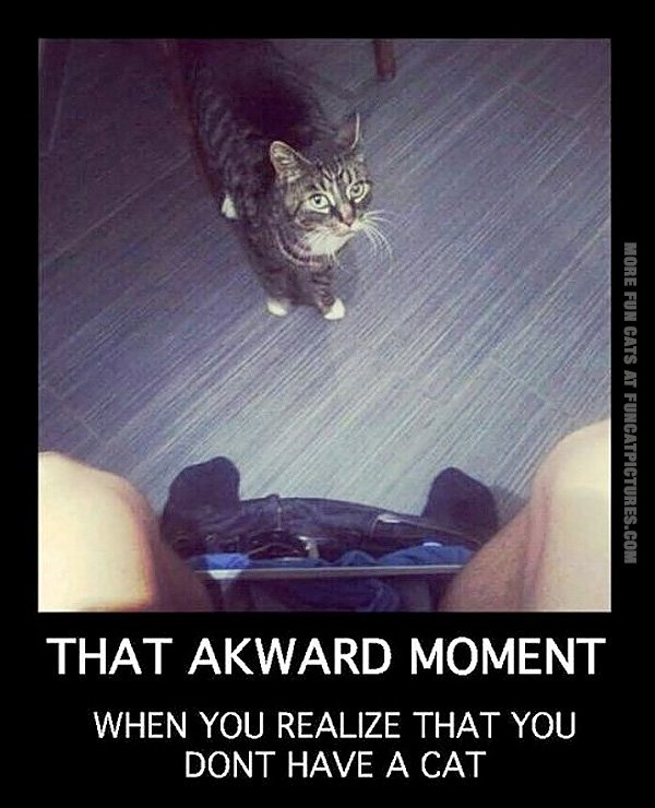 Funny Cat Pictures That Awkward Moment When You Realize Dont