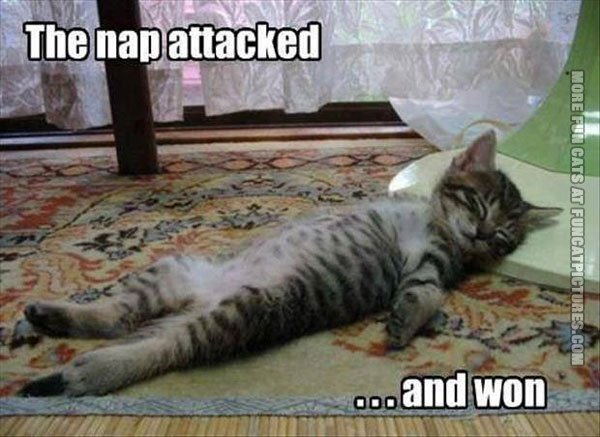 funny cats the nap attacked