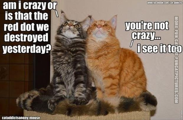 funny cats the red dot we destroyed yesterday