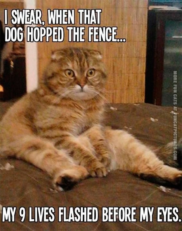 funny-pics-9-lives-flashed-befer-my-eyes-cat-in-shock