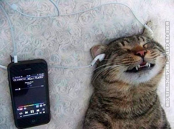 funny-cat-pic-listening-to-music-with-headphones