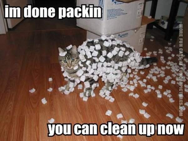 funny-cat-pics-done-packing