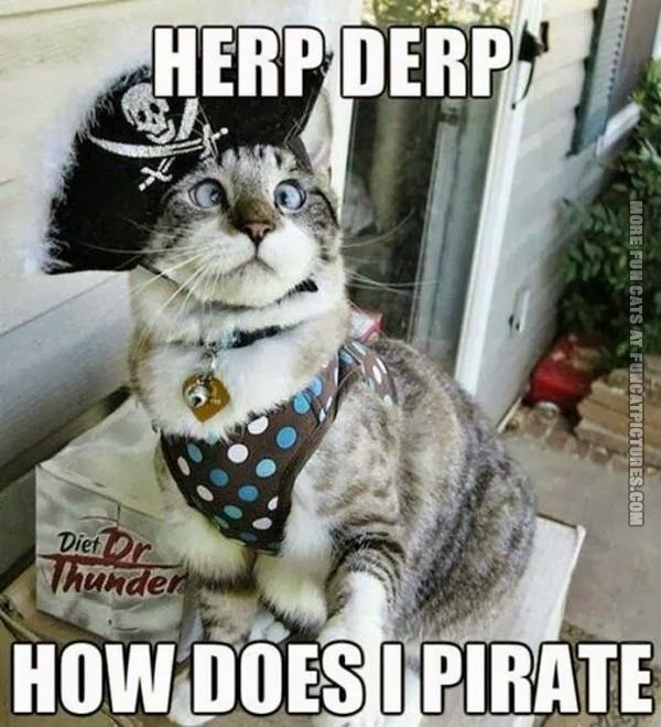 funny-cat-pics-herp-derp-how-does-i-pirate