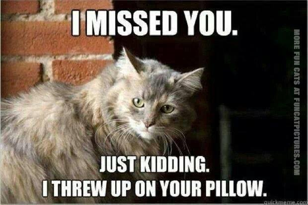 funny cat pics i missed you