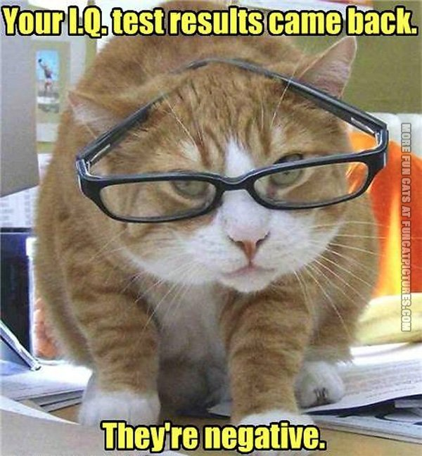 funny-cat-pics-iq-result-came-back