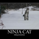 Ninja cat hiding somewhere