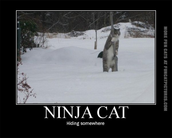 funny-cat-pics-ninja-cat-is-hiding-somewhere