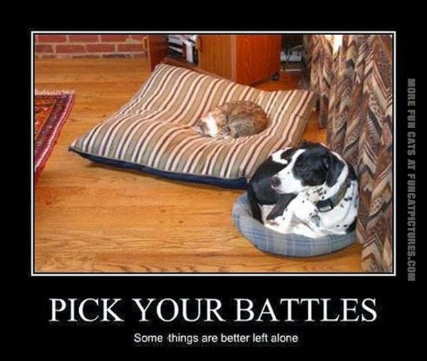 funny cat pics pick your battles