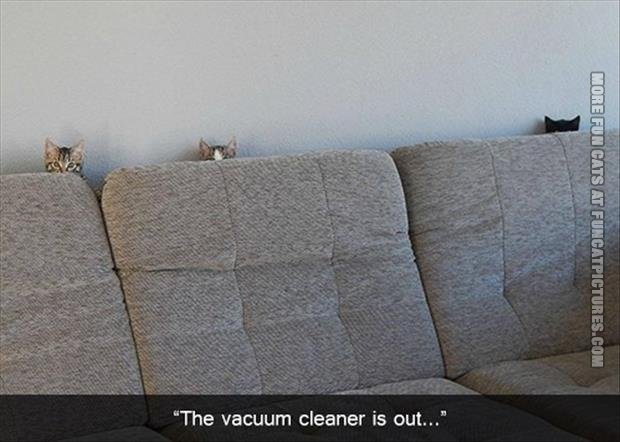 funny cat pics the vacuum cleaner is out