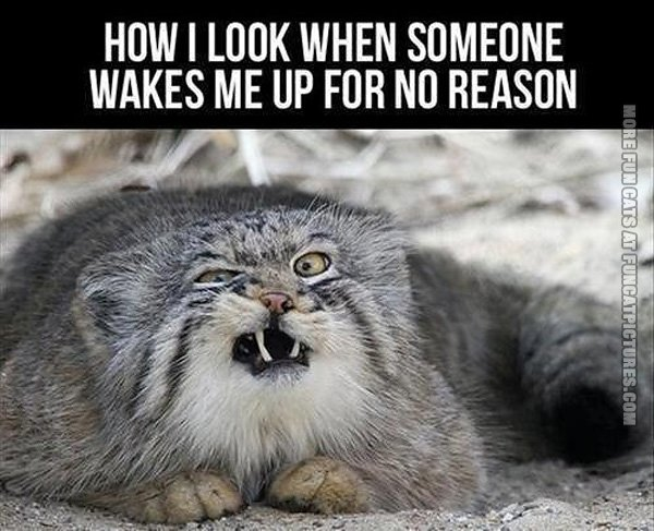funny-cat-pics-when-someone-wakes-me-up-for-no-reason