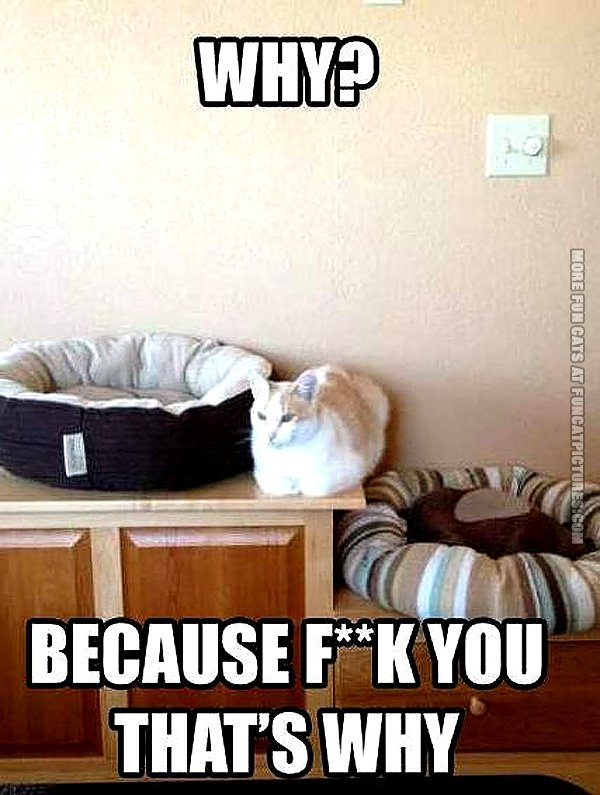 funny-cat-pics-why-buy-a-cat-bed