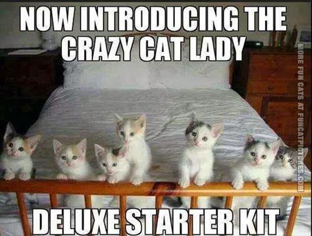 funny cat pics crazy cat lady deluxe starter kit