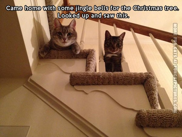 funny-cat-pics-jingle-bells-for-the-christmas-tree