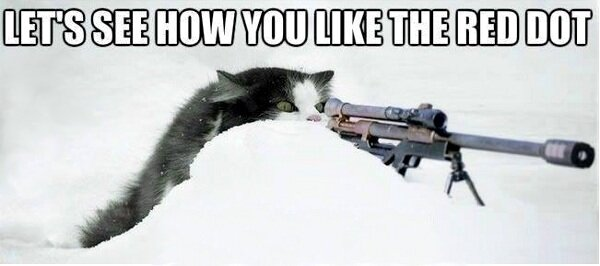 funny cat pics lets see how you like the red dot sniper