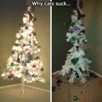 Why cats suck