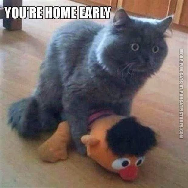 funny cat pics youre home early