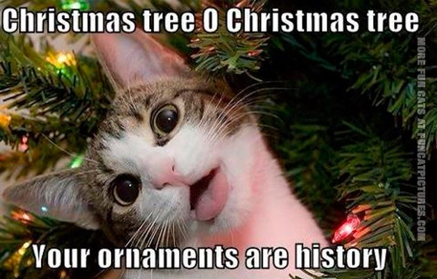 funny-pics-cat-christmas-tree