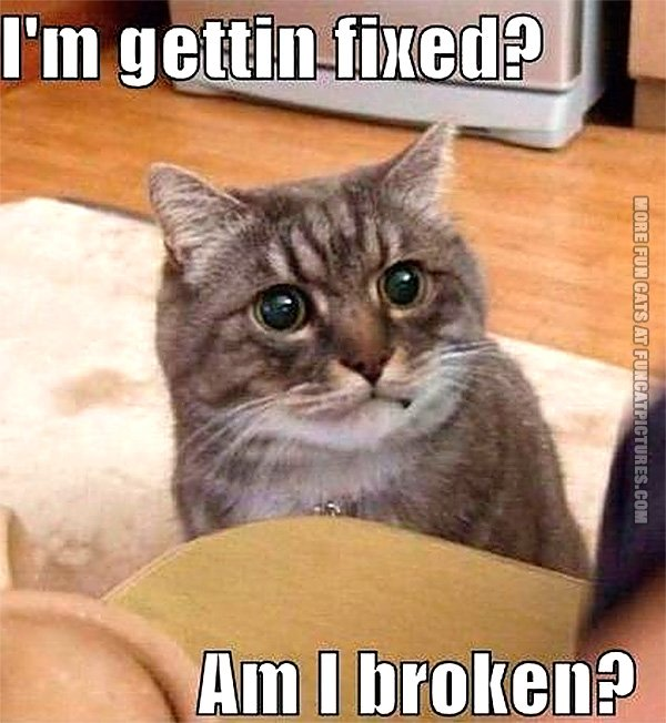 funny-cat-pic-im-getting-fixed