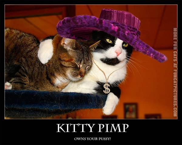 funny-cat-pic-kitty-pimp-owns-your-pussy