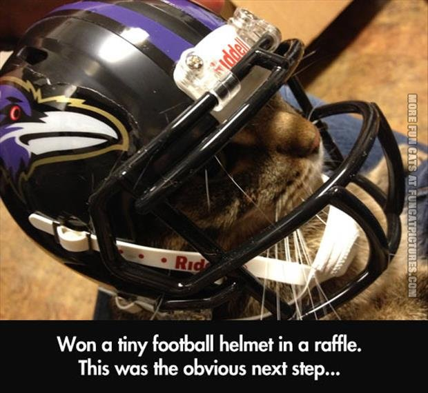 funny cat pic tiny football helmet
