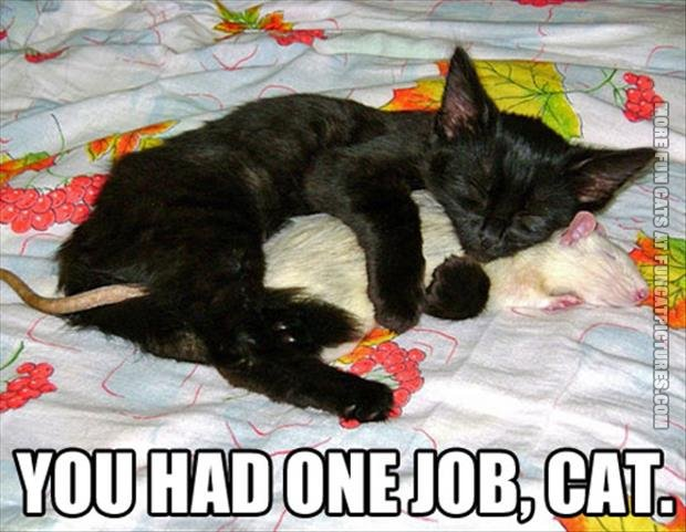 funny cat pics you had one job