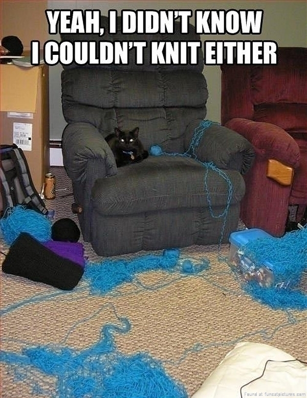 funny-cat-pic-i-didnt-know-i-could-knit-either