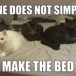 It's not easy to make the bed when you have cats