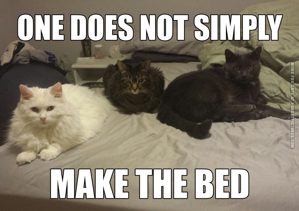 funny cat pic one does not simply make the bed