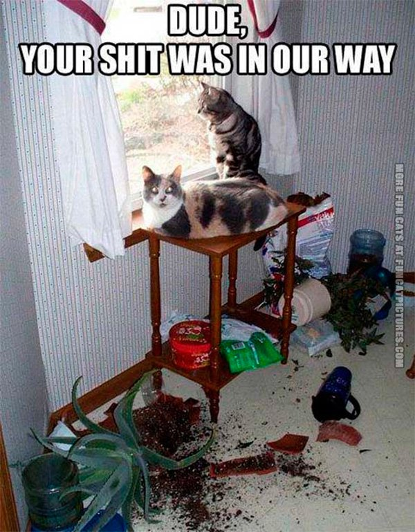 funny-cat-pic-your-shit-was-in-our-way