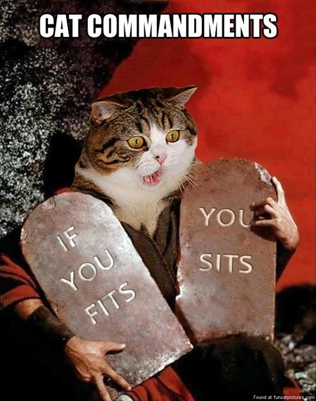 funny cat pics cat commandments