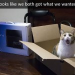 Cat is pleased with his gift