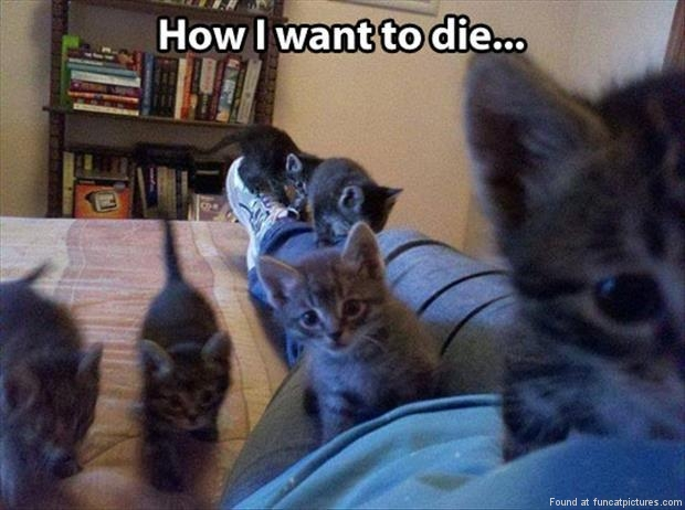 funny cat pictures how i want to die