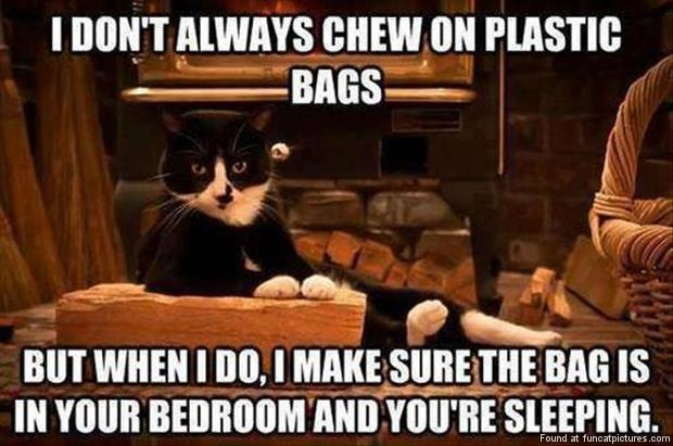 funny cat pictures i dont always chew on plastic bags