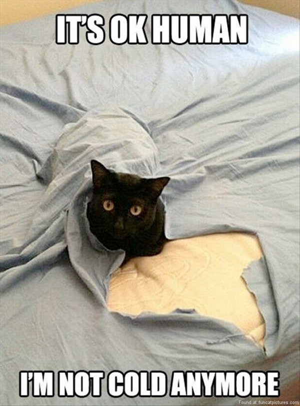 funny-cat-pictures-its-ok-human