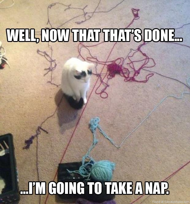 funny cat pictures now thats done