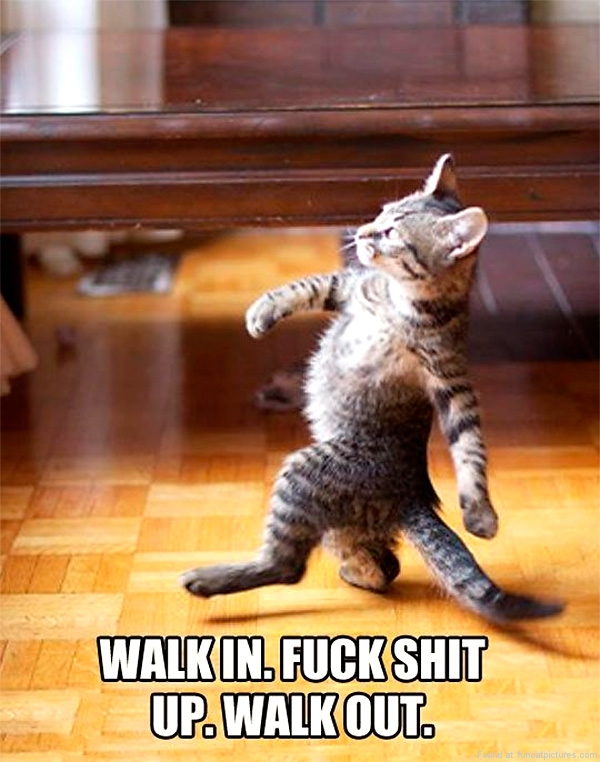 funny-cat-pictures-walk-in-walk-out
