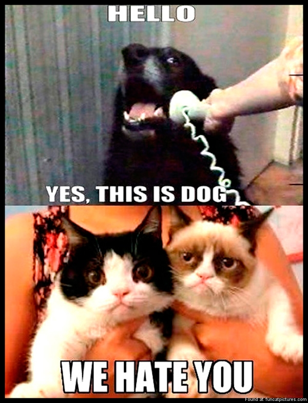 funny-pics-hello-this-is-dog-cats-hate-you