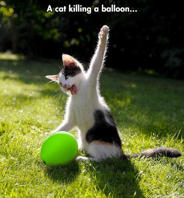 funny-cat-pictures-cat-killing-a-balloon