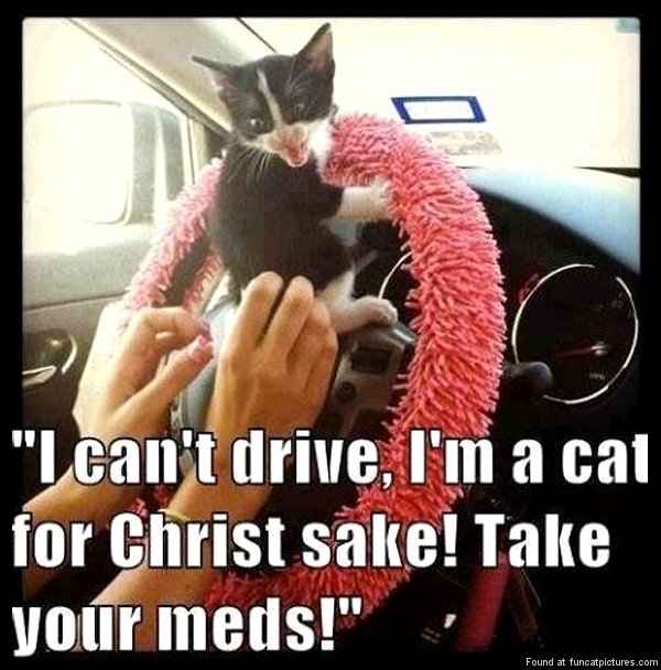funny-cat-pictures-i-cant-drive-take-your-meds