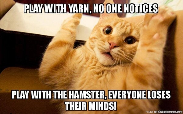 funny cat pictures play with a yarn