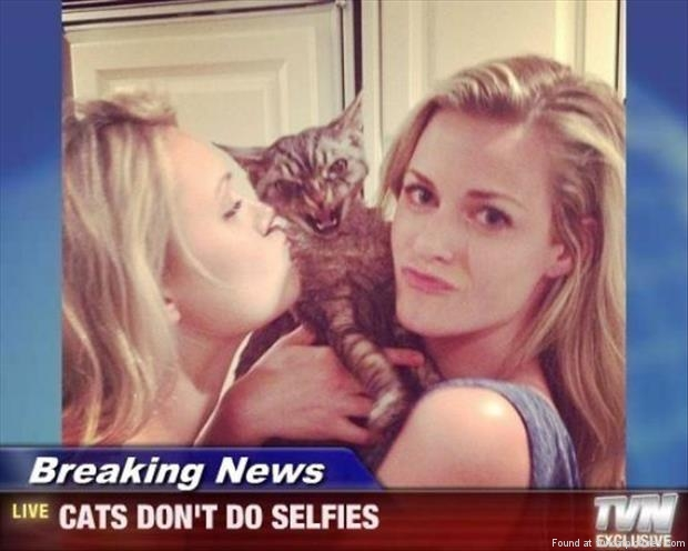 funny cat pictures cats dont do selfies