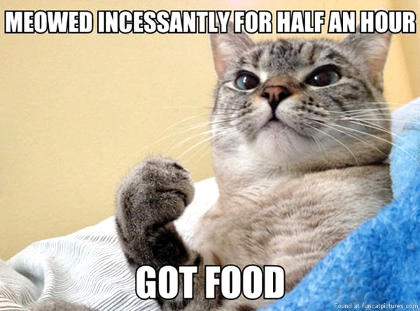 funny cat pictures success cat got food