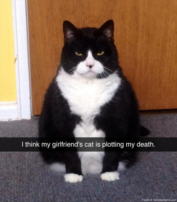 funny cat pictures girlfriends cat is plotting my death