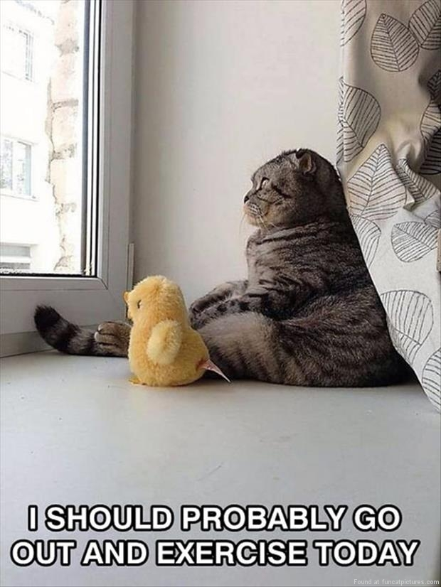 funny cat pictures i should probably exercise
