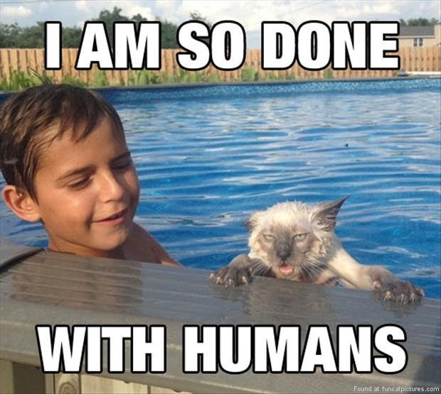 funny cat pictures im so done with humans