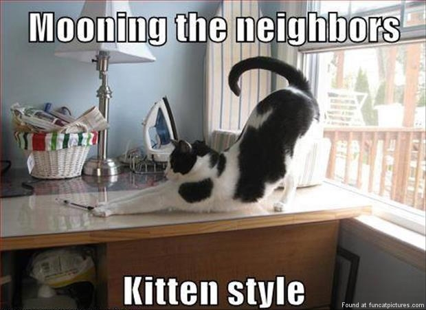 funny-cat-pictures-mooning-the-neighbors-kitten-style